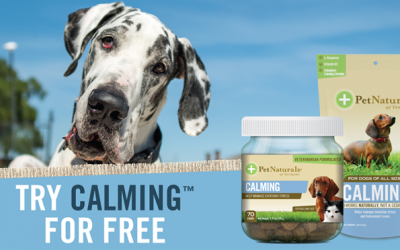Pet Naturals out in the wild- Commercial Pet Photography