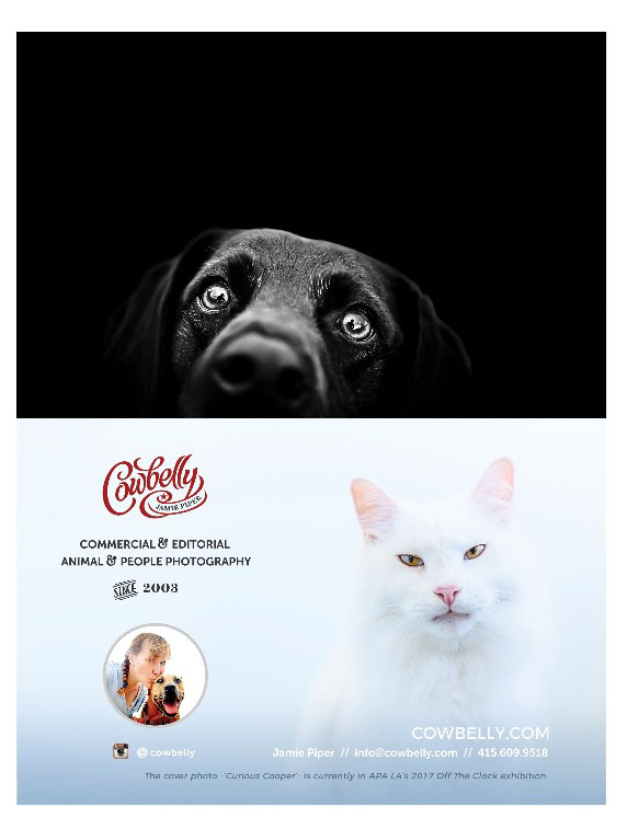 dog graphic design by cowbelly media