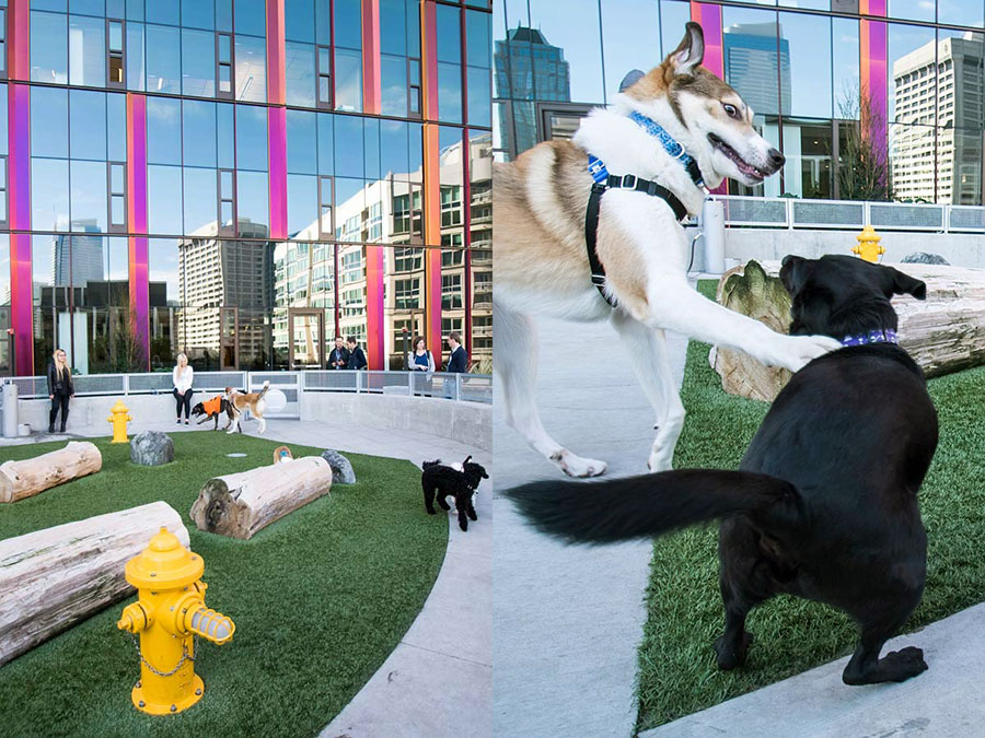 amazon office dogs photography project by jamie piper