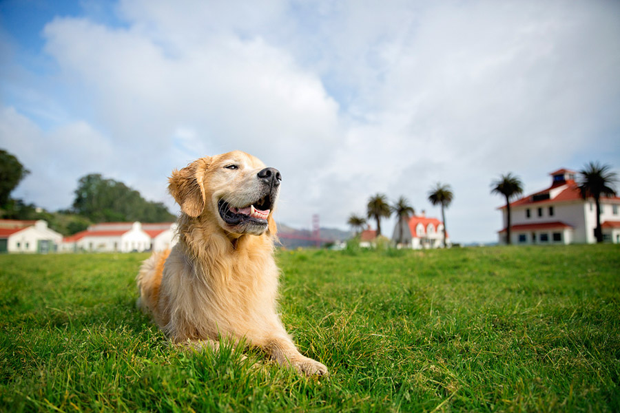 commercial animal photography for pedigree by cowbelly media