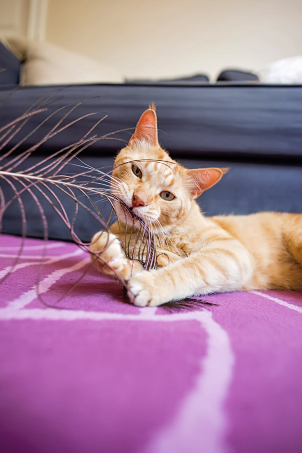 Commercial Cat Photography for pet naturals by cowbelly media