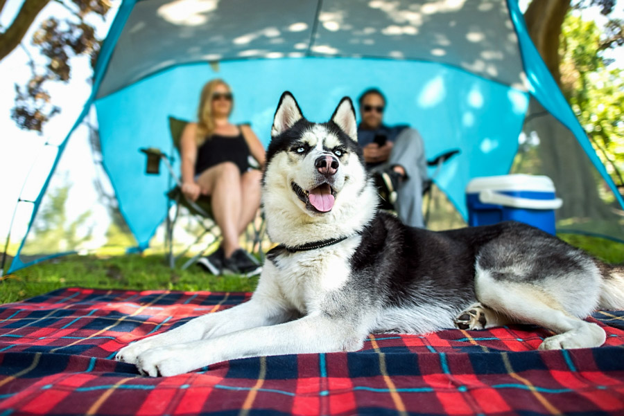 commercial pets & people photography
