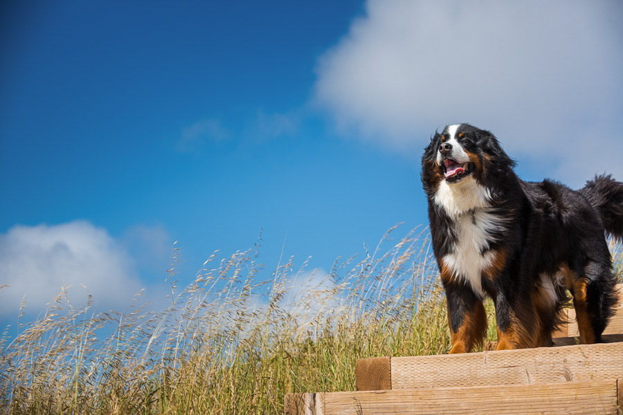 commercial dog photography for pedigree by cowbelly media