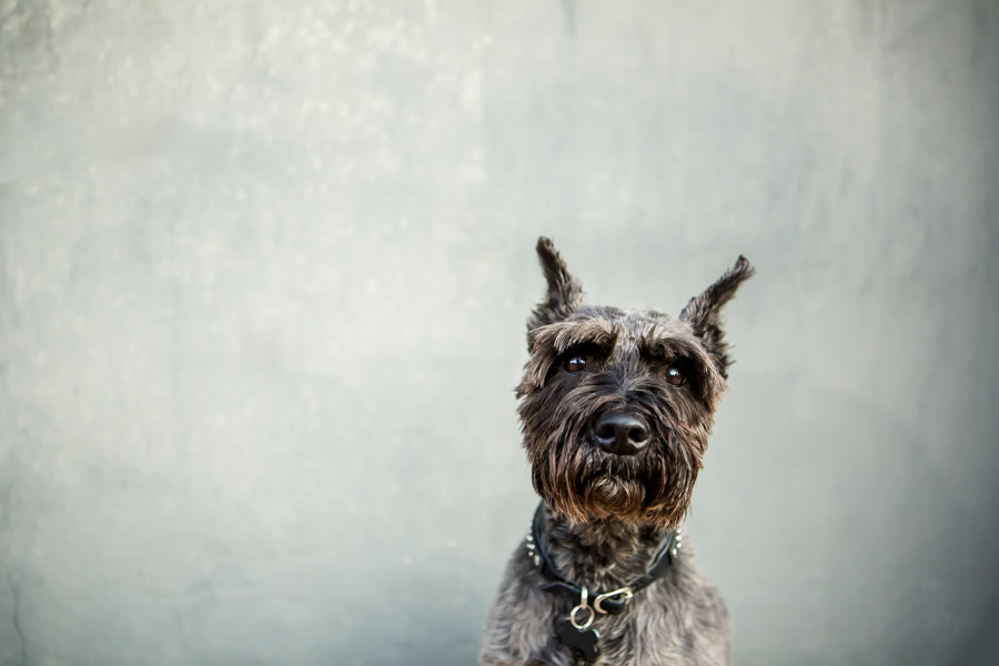 commercial dog photography