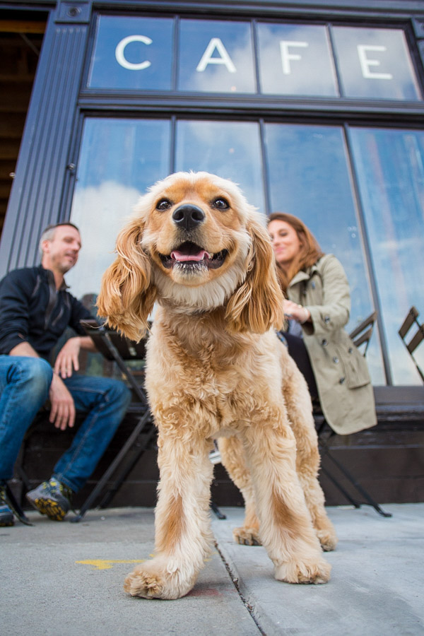 commercial pet photography for pedigree by cowbelly media