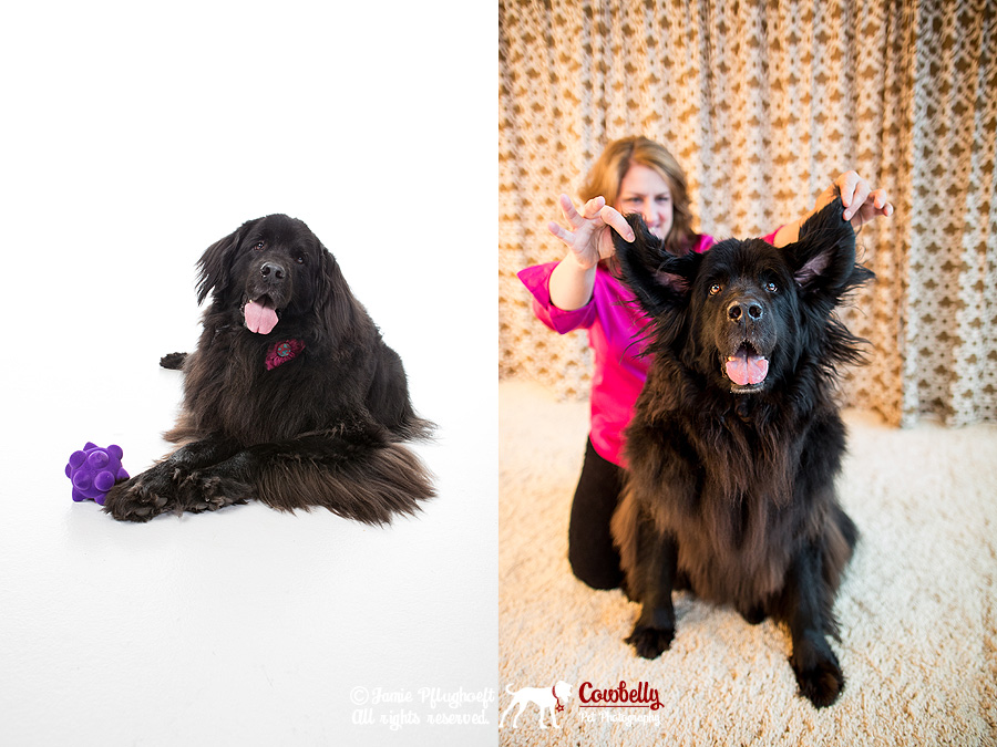 commercial pet photography