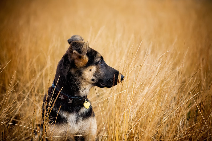 pet photography stock dog photo by cowbelly media
