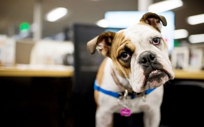 The Office Dogs Photography Project