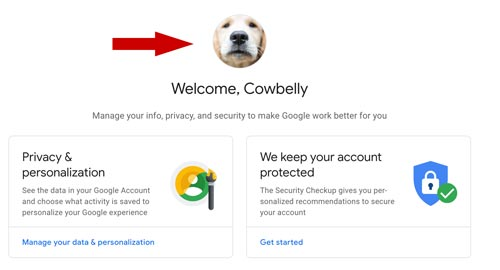 gmail profile photo for cowbelly