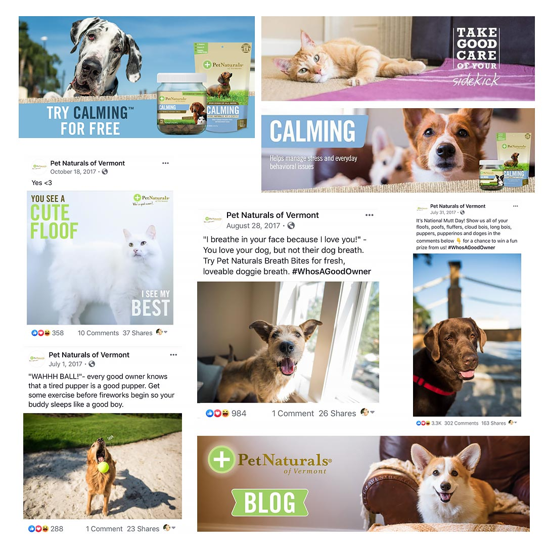 commercial pet photography for pet naturals