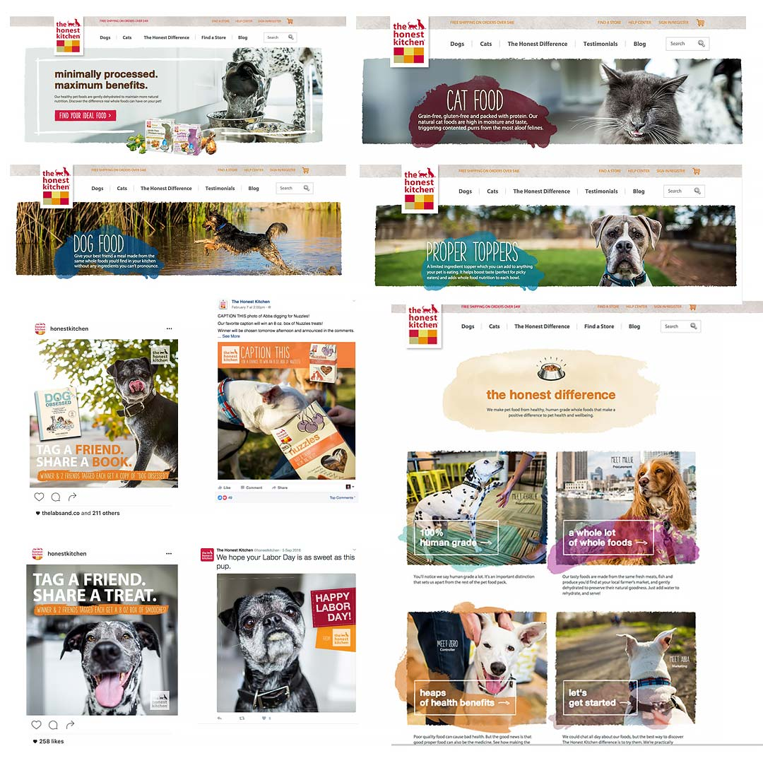 commercial dog photography for the honest kitchen tearsheets